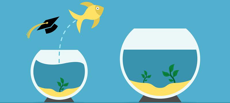 full_Vitae2-fish-big-bowl_copy